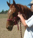 Slide halter noseband around your horse's nose