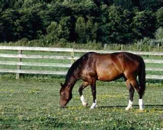 Horse Pasture Management, Managing Horse Pasture