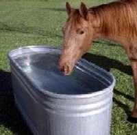 Watering and Feeding Your Horse, Watering Your Horse